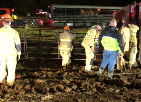 Fire District 7 and Minden Fire Department Rescue at the cattle truck rollover on I20 near Dixie Inn on September 21